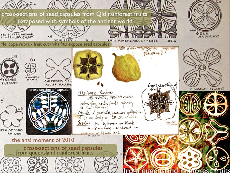 Seed motif inspiration for Sophie Munns' work showing cross-sections of seedpods and sketches.